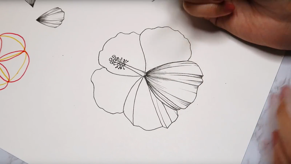 hibiscus drawing