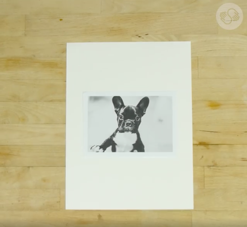 Here, we've chosen a photo of a French bulldog and printed it in black and white.