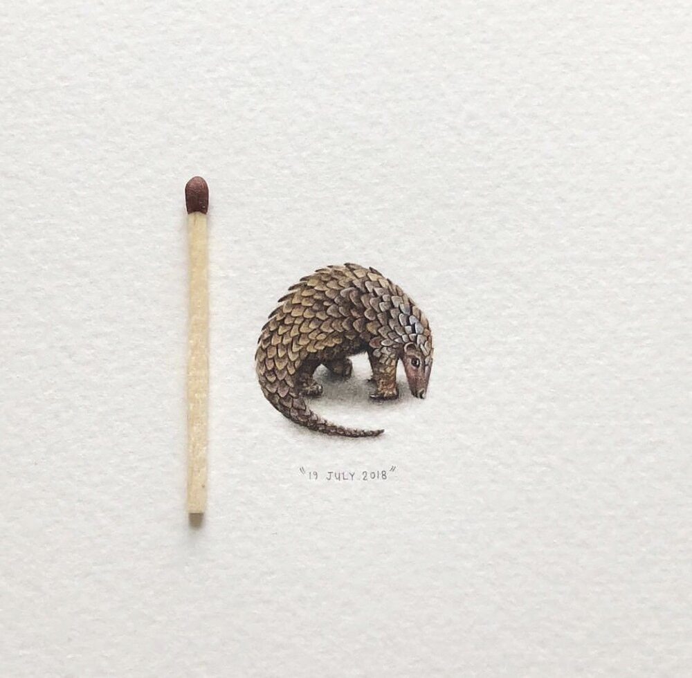 Pangolin by Lorraine Loots