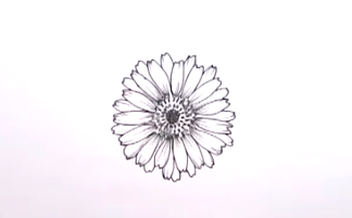 Grab a pen and sketch this beautiful, lifelike daisy.