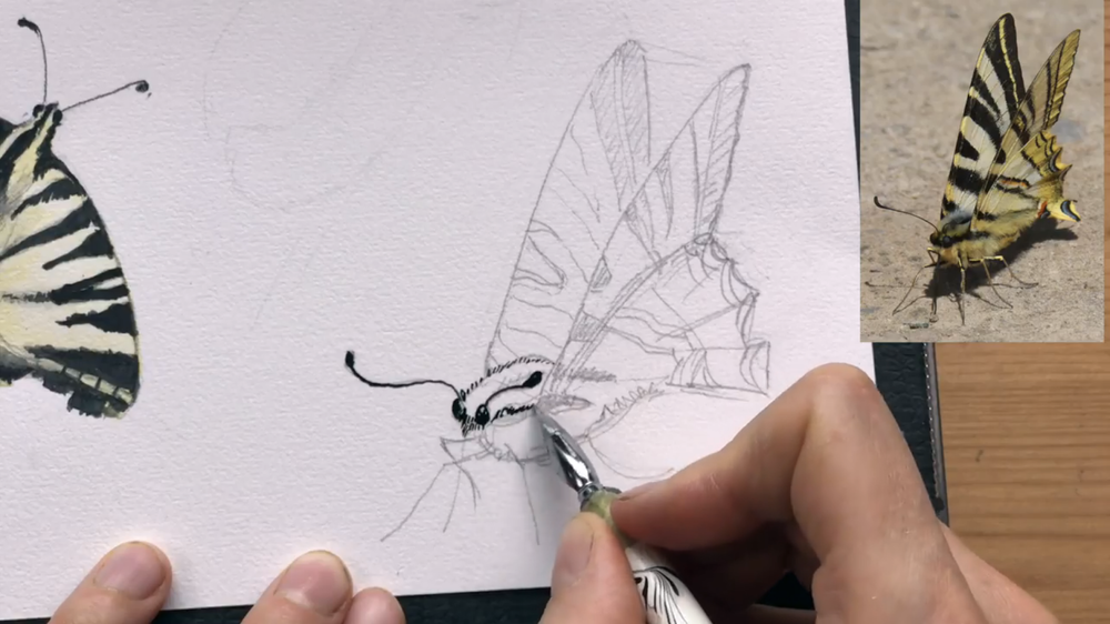 Skillshare instructor Julia Bausenhardt shows how to draw a Swallowtail side view.