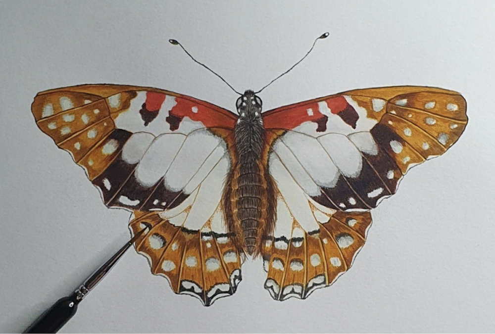 Skillshare student Lauren Mae was able to capture this realistic butterfly despite being new to watercolors.