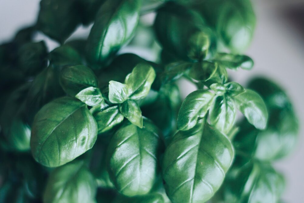 F resh basil is best, but sub dried if it's not in season.