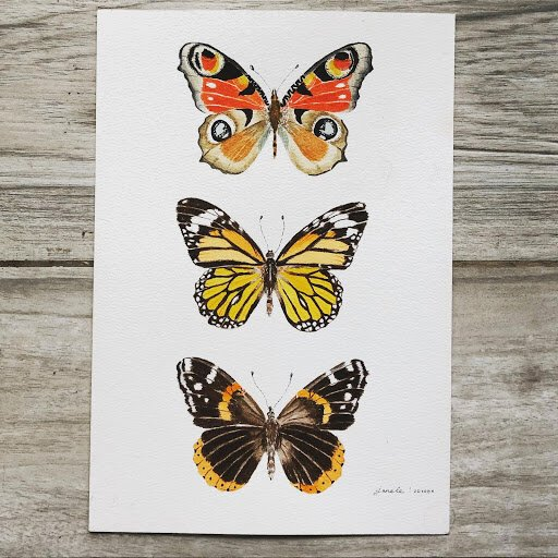 A trio of watercolor butterflies by Skillshare student Jane LeHoang.