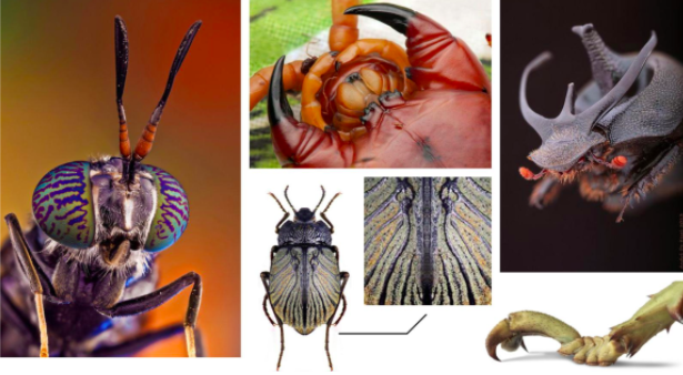 This collection of insect images from Pinterest served as the inspiration for Justin Goby Fields' alien-like character.
