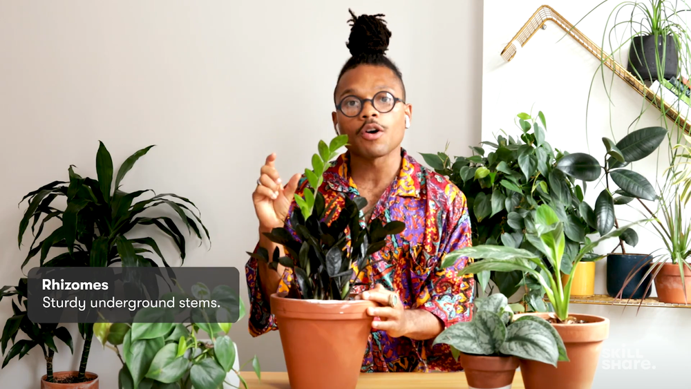 Christopher Griffin, The Plant Kween, shows us how to fill our homes with plants and treat them with love.