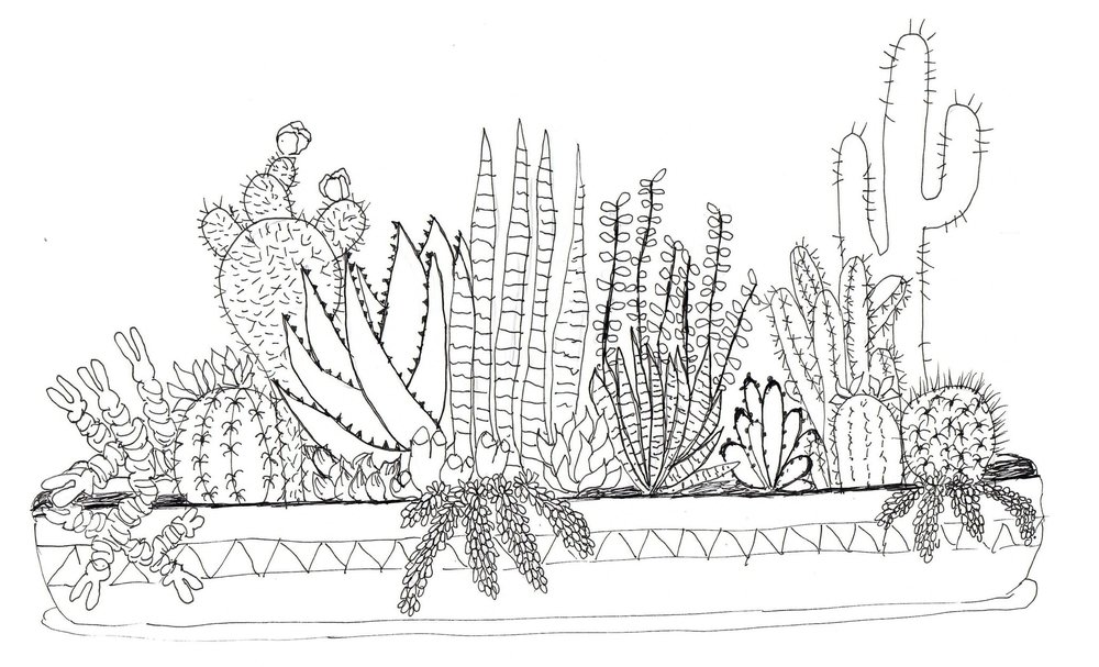 Image by Skillshare student Tanya F. for Top Teacher Peggy Dean's    Line Drawing: Cactus and Succulent Edition