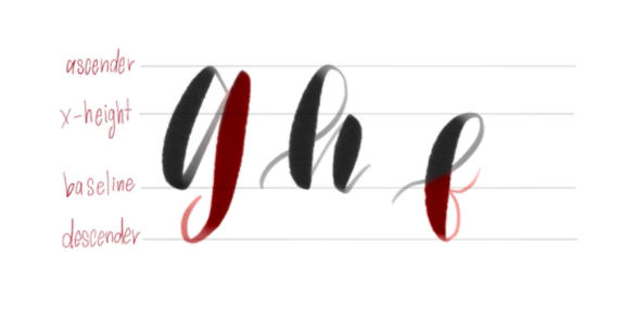 Four basic lines create the foundation for all letters in modern calligraphy.
