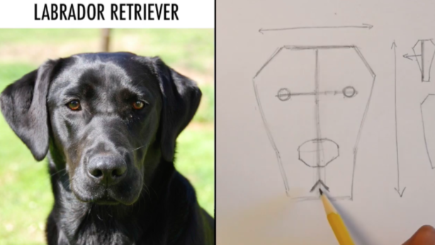 Josh shows his class how to create realistic looking dog drawings by breaking it down into shapes.