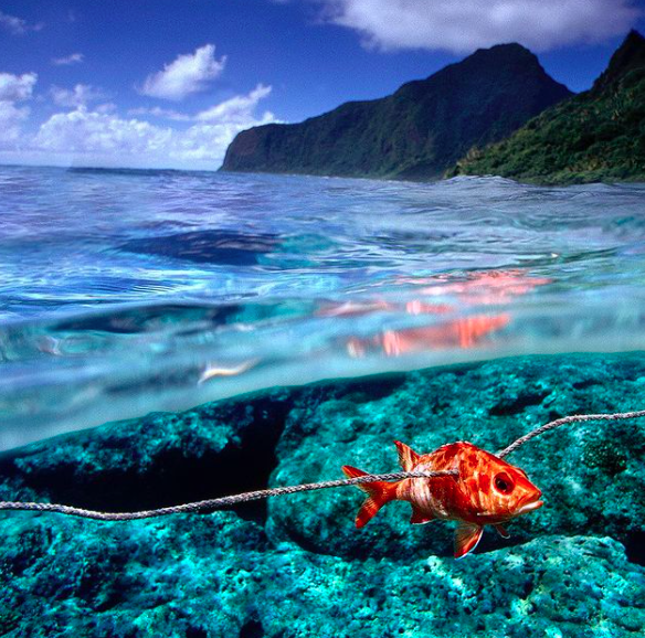 A spearfishing scene by Randy Olson.
