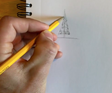 Adding branches brings your pine tree drawing to life.