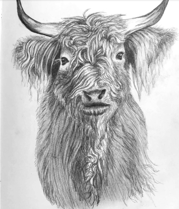 Drawing the fur of an animal is a great exercise in creating texture by using pencil drawing techniques like hatching and blending.