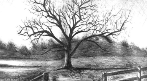 Using graphite pencils in a variety of weights brings life and texture to this drawing by Skillshare instructor Diane Flick.
