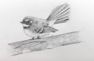 With so many details on their tiny bodies, birds are excellent subjects for pencil drawing.