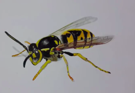 Detail and color brings this bee to life.
