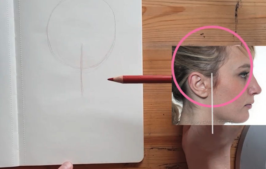 As with face-forward pictures, the profile starts with a simple circle and line approach.