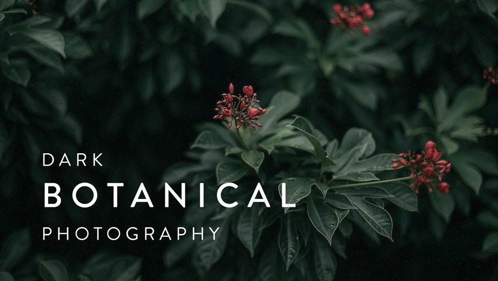 PHOTOGRAPHY:  Low-light photography meets the botanical trend in  Dark Botanical Photography: Capture Beautifully Moody Images of Plants .
