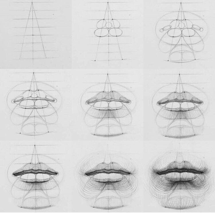 An academic drawing diagram of the lips by Skillshare instructor Andrey Samarin