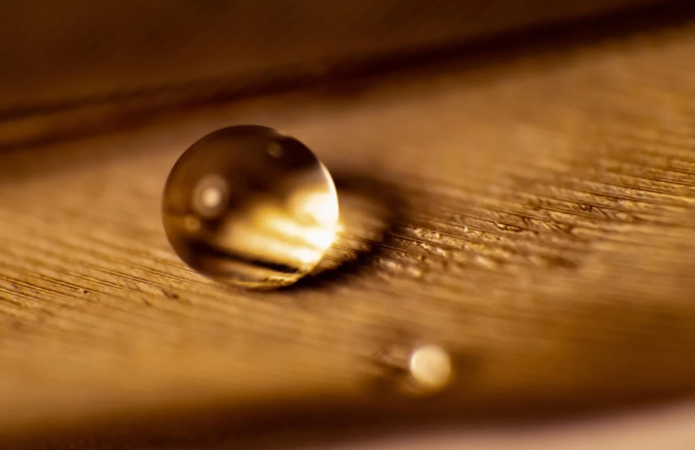 Water droplet on a feather, shot by Skillshare student Mike-Alec Kearney.
